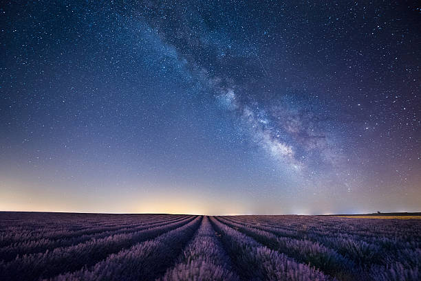 France, Provence, Lavender fields with milky way at night:スマホ壁紙(壁紙.com)