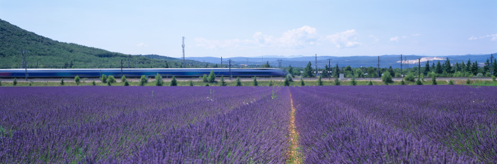 Passenger Train「France, Provence, TGV high speed train and lavender fields (blurred motion)」:スマホ壁紙(12)