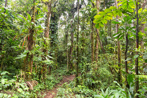 Amazon Rainforest「Tropical rainforest」:スマホ壁紙(0)