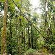 アマゾン熱帯雨林壁紙の画像(壁紙.com)