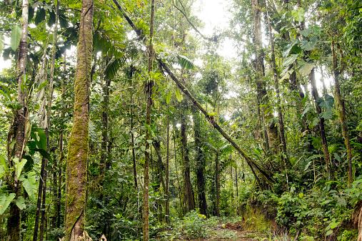 アマゾン熱帯雨林「Tropical rainforest」:スマホ壁紙(4)