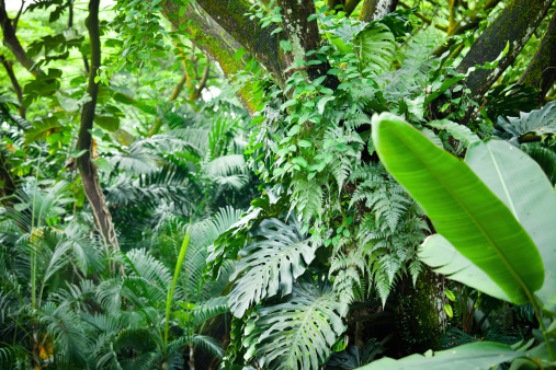 南国「熱帯雨林」:スマホ壁紙(6)