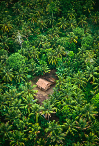 Rainforest「Tropical rain forest & pam trees.」:スマホ壁紙(18)
