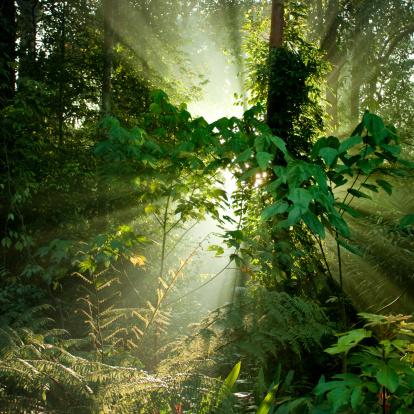Rainforest「Tropical rainforests of Borneo」:スマホ壁紙(5)