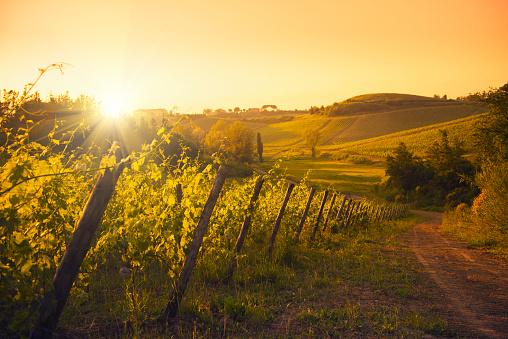 Orange - Fruit「Chianti Region hills at sunset in Tuscany - Italy」:スマホ壁紙(15)