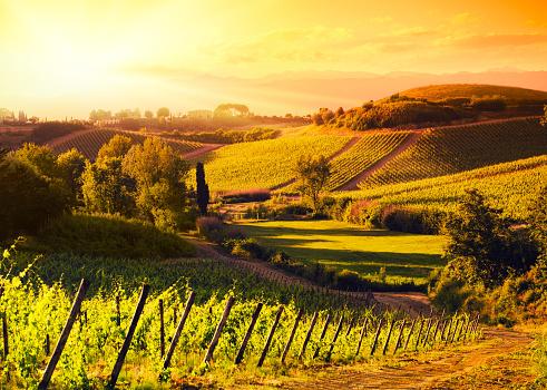 Chianti Region「Chianti Region hills at sunset in Tuscany - Italy」:スマホ壁紙(18)