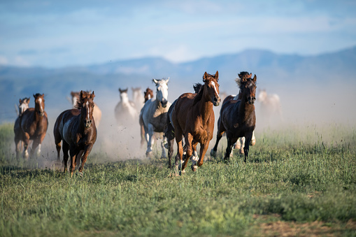 Horse「Running of the wild horses」:スマホ壁紙(17)