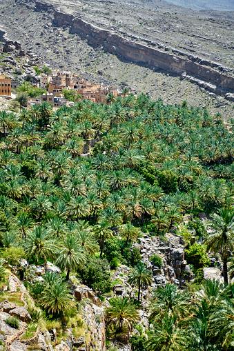 Riverbed「Green stories in Oman」:スマホ壁紙(6)