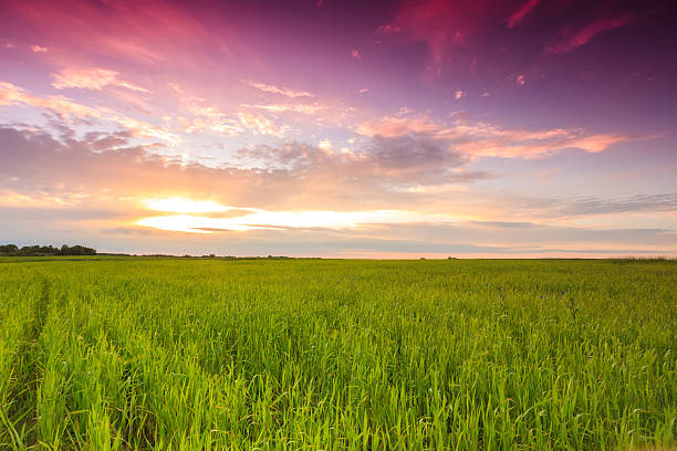 Sunset over green field:スマホ壁紙(壁紙.com)