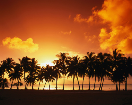 Pacific Ocean「Sunset over palm trees on west coast, Cook Islands」:スマホ壁紙(3)