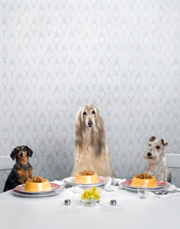 Pet Food「Dachshund, Afghan hound, and wire-haired terrier sitting around dinner table」:スマホ壁紙(17)