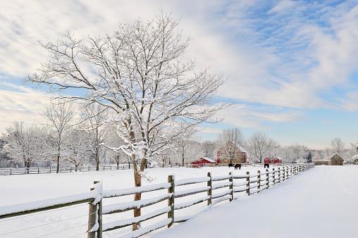 Horse「Farm Scenics in Winter」:スマホ壁紙(10)