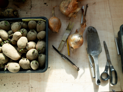 King's Lynn「Onion and potatoes prepared for planting」:スマホ壁紙(7)