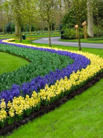 Keukenhof Gardens「Keukenhof Park, Netherlands」:スマホ壁紙(14)