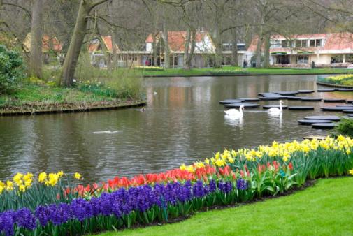 Keukenhof Gardens「Keukenhof Park, Netherlands」:スマホ壁紙(8)