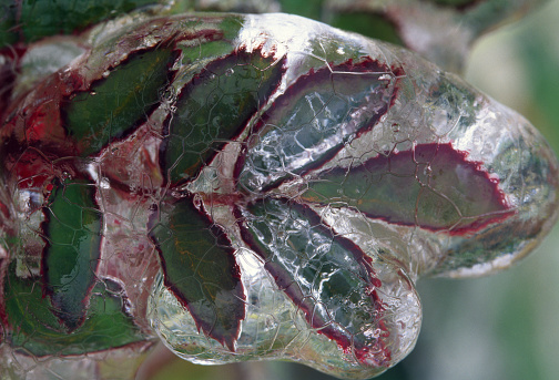 Surrounding「Ice Encasing Twig and Leaves」:スマホ壁紙(6)