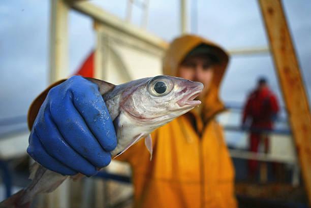 Scottish Trawlermen Work The Waters Of The North Atlantic:ニュース(壁紙.com)
