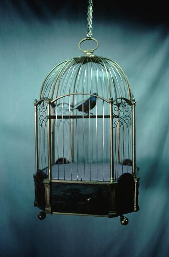 1980-1989「Bird in Birdcage」:スマホ壁紙(18)