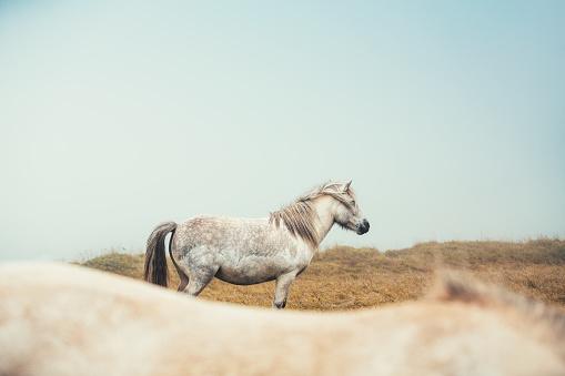 Horse「Icelandic Horses」:スマホ壁紙(10)