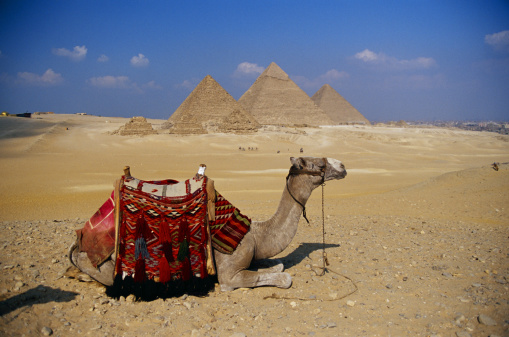 Camel Family「Camel lying down, Giza, Egypt」:スマホ壁紙(15)