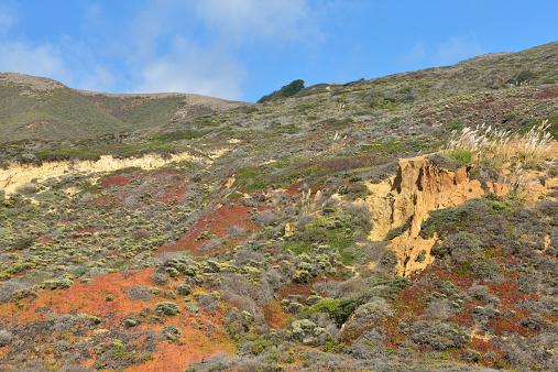Big Sur「Landscape along Big Sur」:スマホ壁紙(1)