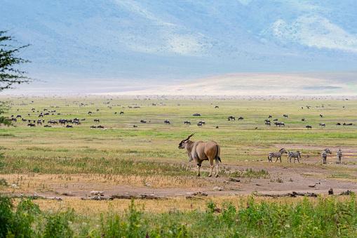 Caldera「Landscape, Africa, Eland」:スマホ壁紙(19)