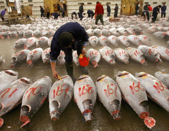 Japan「Tsukiji Wholesale Fish Market Opens First Auction Of The New Year」:写真・画像(10)[壁紙.com]