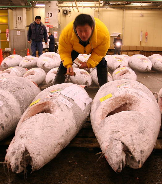 Japan「Tsukiji Wholesale Fish Market Opens First Auction Of The New Year」:写真・画像(11)[壁紙.com]