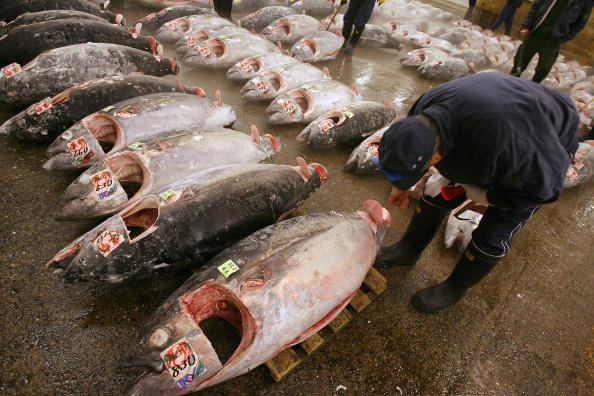 Japan「Tsukiji Wholesale Fish Market Opens First Auction Of The New Year」:写真・画像(8)[壁紙.com]