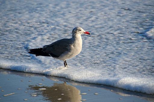 ビーチ「Seagull」:スマホ壁紙(4)
