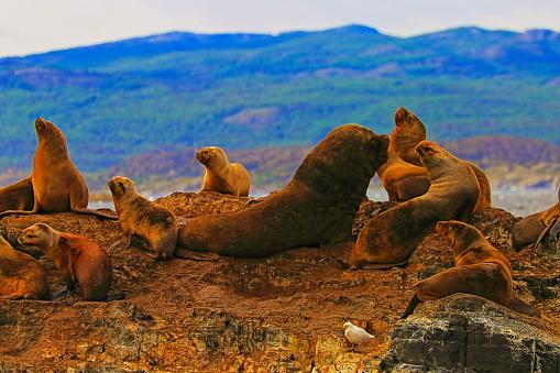 Albatross「Sea lions and Seals rock island in Beagle Channel - Ushuaia - Tierra Del fuego」:スマホ壁紙(8)