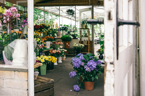 あじさい「Germany, view inside salesroom of a plant nursery」:スマホ壁紙(10)