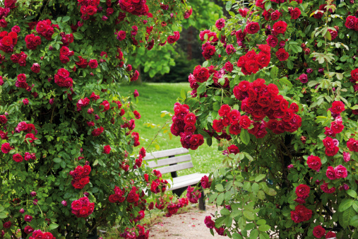 Bench「Germany, View of rose garden」:スマホ壁紙(7)