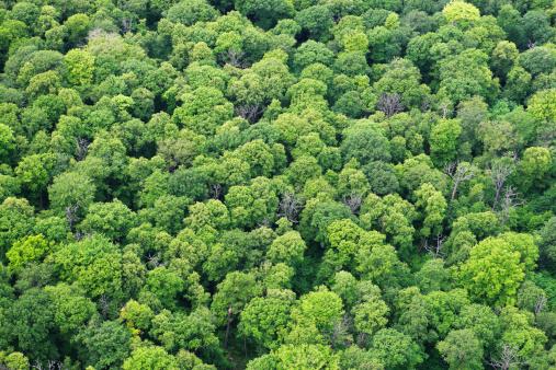 森林「Germany, View of forest at Oppin」:スマホ壁紙(13)