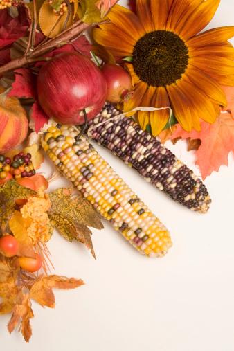 Indian Corn「autumn arrangement」:スマホ壁紙(15)