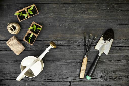 Planting「Gardening tools and seedlings on dark wood」:スマホ壁紙(11)