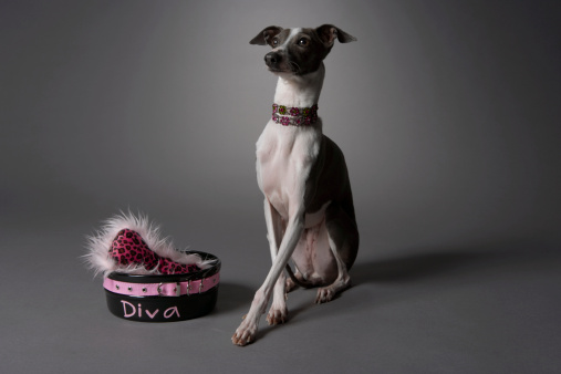 High Society「Dog with diva bowl」:スマホ壁紙(6)