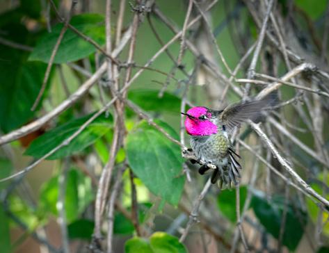 Landing - Touching Down「Glittering Hummingbird in motion」:スマホ壁紙(19)
