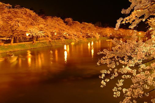 夜桜「Canal lined with blossoming cherry trees at night」:スマホ壁紙(14)