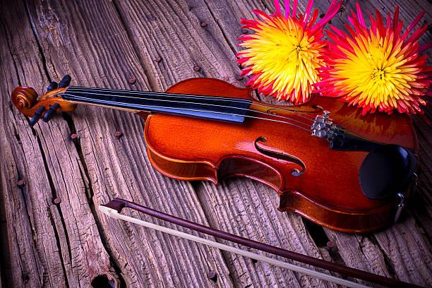 Violin with spider mums:スマホ壁紙(壁紙.com)