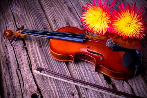 Violin「Violin with spider mums」:スマホ壁紙(3)