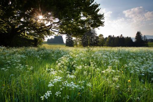 花畑「bavarian meadow」:スマホ壁紙(2)