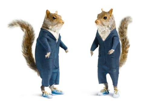 コンゴ民主共和国「Well dressed squirrels in suits on white. 」:スマホ壁紙(14)