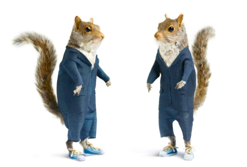 農村の風景「Well dressed squirrels in suits on white. 」:スマホ壁紙(9)