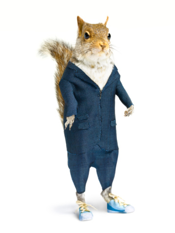 自生「Well dressed squirrel in suit on white background.」:スマホ壁紙(17)