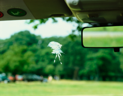 Uncertainty「Bird poo on car windscreen」:スマホ壁紙(18)
