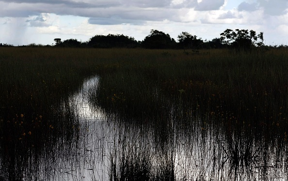 Environmental Conservation「Congress Debates Everglades Restoration In Face Of Bush Veto Threat」:写真・画像(1)[壁紙.com]