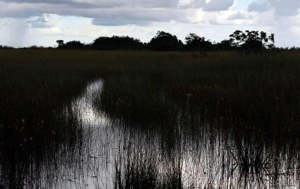Congress Debates Everglades Restoration In Face Of Bush Veto Threat:ニュース(壁紙.com)