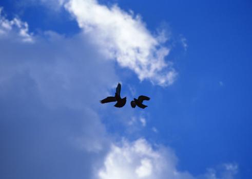 Image processing filter「Blue Sky」:スマホ壁紙(19)