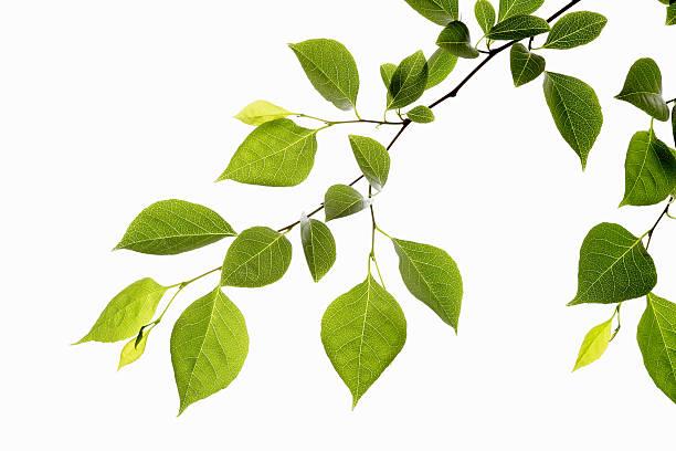 Leaf Series:スマホ壁紙(壁紙.com)